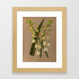 Aendsen, Arentine H. (1836-1915) - Haarlem's Flora 1872 - Hyacinthus Candicans Framed Art Print