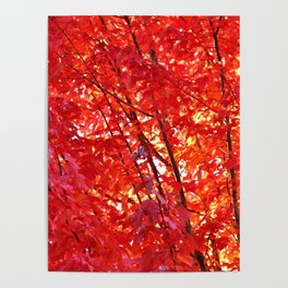 FIERY RED - FALL LEAVES Poster
