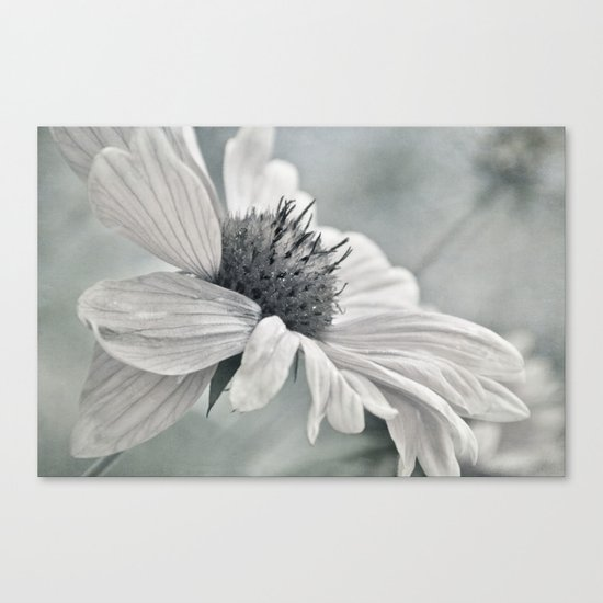 pale Canvas Print
