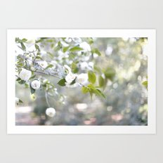 white garden Art Print