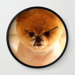 Adorable Pomeranian Puppy Wall Clock