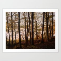 Autumn in the Woods 2 Art Print