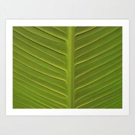 Leaf 3 Art Print