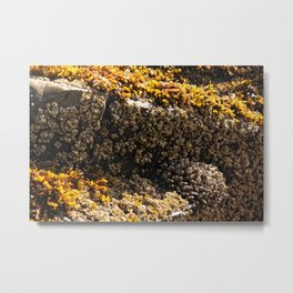 Barnacles on the Beach Metal Print