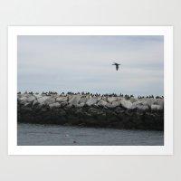 Cormorants in Provincetown Harbor Art Print