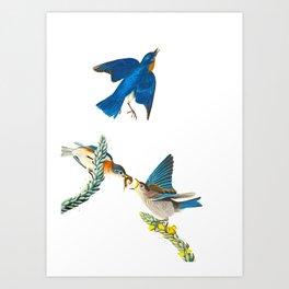 Blue Bird Vintage Illustration Art Print