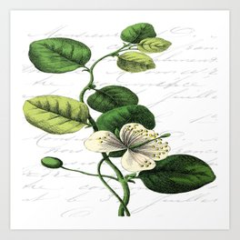 Botanical Flower No2 Art Print