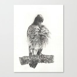 Grooming Magpie 1 Canvas Print