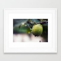 lime Framed Art Prints featuring lime by JOERGOTTO