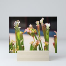 Pitcher Plants Mini Art Print