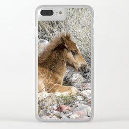 Salt River Colt Taking a Rest Clear iPhone Case