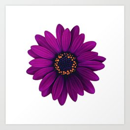 Purple Floating Daisy Art Print