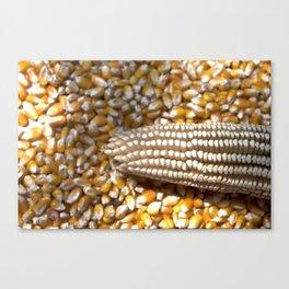 Golden Yellow Corn Canvas Print