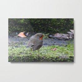 Robin Redbreast Metal Print