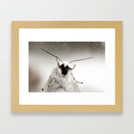 White Moth Framed Art Print