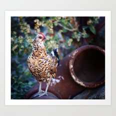 Chicken II Art Print