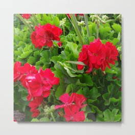 RED GERANIUMS GREEN GARDEN Metal Print