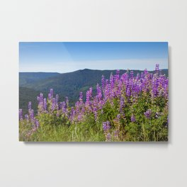 The Lupines in the Hills Metal Print