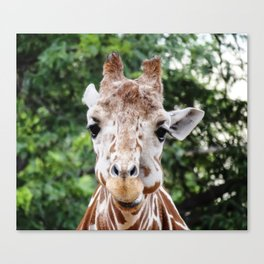 Silly Giraffe Canvas Print