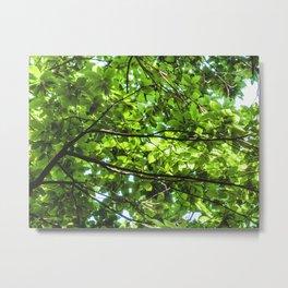 Leaf roof Metal Print