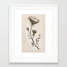 Queen Anne's Lace Framed Art Print