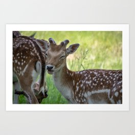 Winking deer Art Print