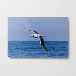 Amazing Albatross Metal Print