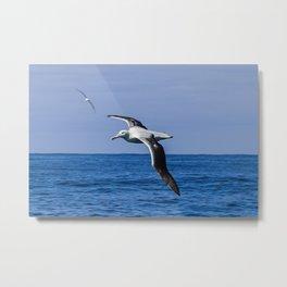 Amazing Albatross Metal Print