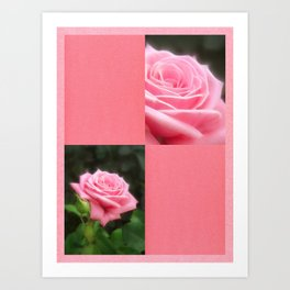 Pink Roses in Anzures 3 Blank Q11F0 Art Print