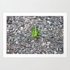Grashopper Art Print