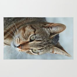 Stunning Tabby Cat Close Up Portrait Rug