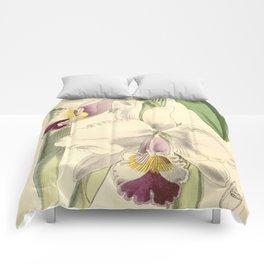 Cattleya candida (as Cattleya quadricolor) Curtis' 91 (Ser. 3 no. 21) pl. 5504 (1865) Comforters