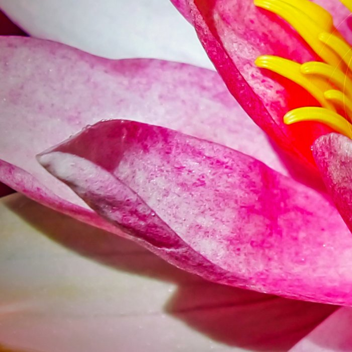 Wellness Water Lily Rose  6 Leggings