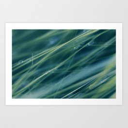 Kentucky Blue grass Art Print