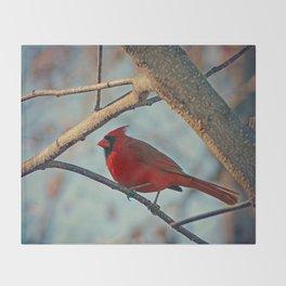 Pretty Male Cardinal Throw Blanket