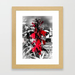 Cardinal Flower Framed Art Print
