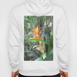 Brilliant Bromeliad Hoody