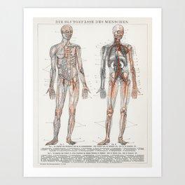 The Human Blood Vessels 1898 Art Print