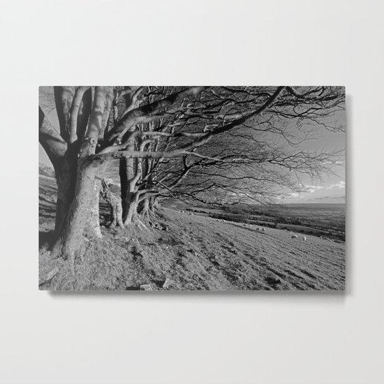 Beech Trees Metal Print