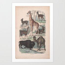 Emil Hochdanz - Mammals (1860s) - Mammals 2 Art Print