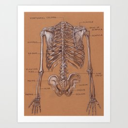 Jesse Young's Human Anatomy Drawing of Skeletal Structure of the Torso (Circa 2005) Art Print