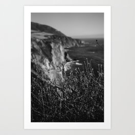 Big Sur Wild Flowers Art Print
