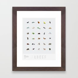 In Pieces – Species Collection Framed Art Print