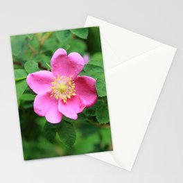 A Very Pink Wild Rose Stationery Cards