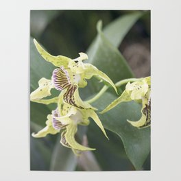 Longwood Gardens Orchid Extravaganza 64 Poster