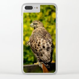 Hawk in sunflowers Clear iPhone Case