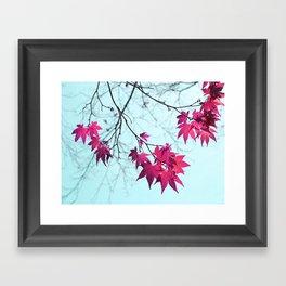 Maple Tree Stars Framed Art Print