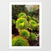 succulents Art Prints featuring Succulents  by Liveart4evr
