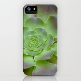 Hens and chicks cactus iPhone Case