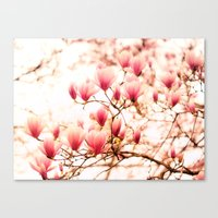 cherry blossoms Canvas Prints featuring Cherry Blossoms by Vivienne Gucwa